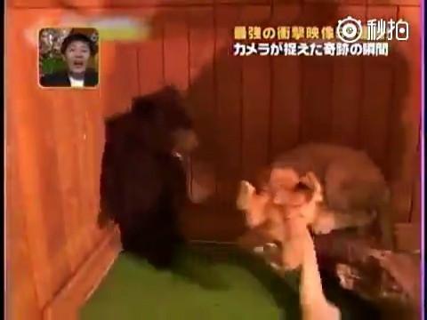 胆小勿入_胆小的熊