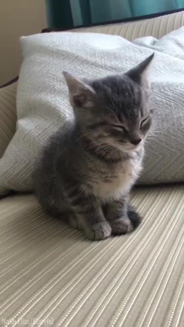 猫脐带怎么剪步骤图片