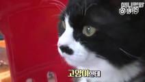 社会我喵姐,话少路子野!网友实拍一只在海鲜市场看店的猫,尽职尽责。别人家的猫 .
