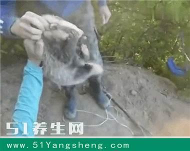 壁纸 雕塑 动物 狗 狗狗 380_302