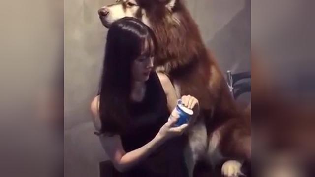 萌妹抱起阿拉斯加大呼救命,镜头拉近才发现吓一跳