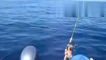 钓鱼高手: 出海钓鱼惊喜-钓到鲨鱼