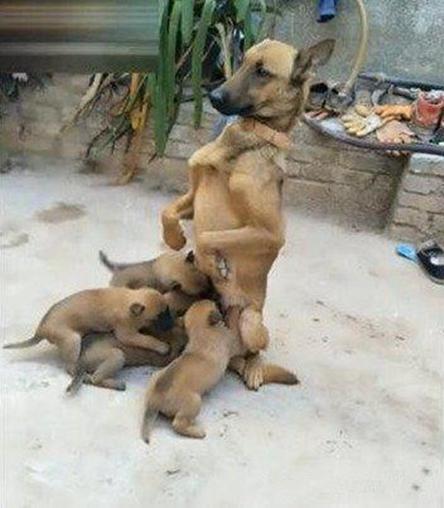外国母亲与儿子性交图片_狗妈妈和儿子交配后生出来的小狗好吗
