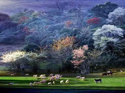菌子山风景区位于师宗县东南部,是集森林与喀斯特自然景观为一体的山