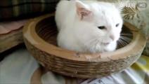 猫咪拒绝了铲屎的送的礼物,并且挠了一把铲屎官
