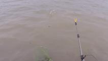最大的鱼跑了,上来的都是这种鱼,钓鱼们这个怎么避免?