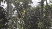 探秘荒野求生拍摄地—世界第三大岛婆罗洲雨林探险