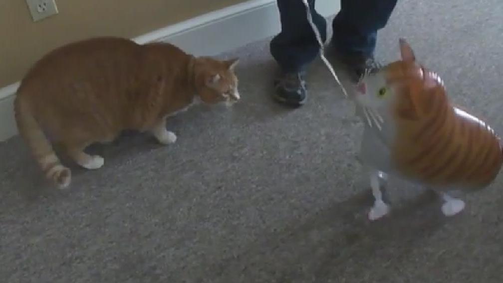 【萌猫】实拍超可爱搞笑的猫咪_标清