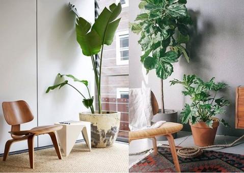 北欧风格植物摆放