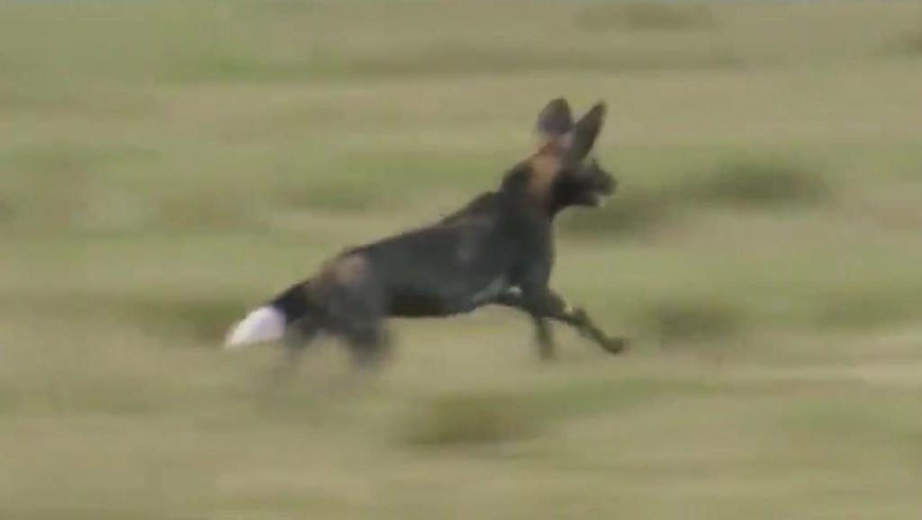 世界最拽的_世上最拽的狗狗
