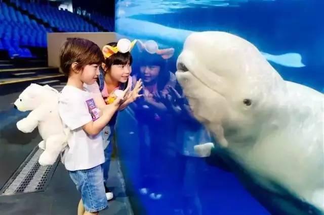 珍贵的中华白海豚,更有亲子水族馆