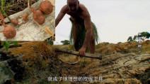 德哥弄长颈鹿骨头做工具,挖野薯吃,烤的吃真香!