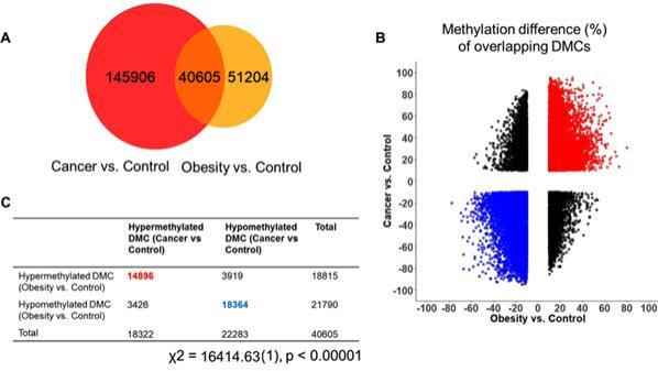 看看都有哪些原因造成肥胖, 以及如何規避?
