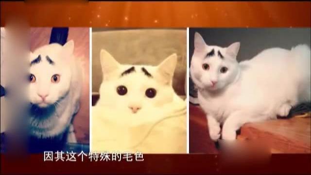 猫咪的八字眉!方清平说一说《山姆的猫》
