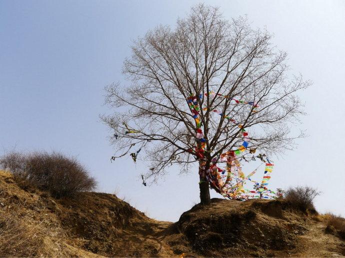寺院山顶上有一棵茂盛的大树