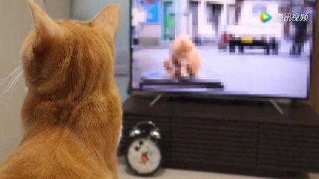 猫咪也是个电视迷, 霸占了电视都没有主人的份!