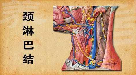 淋巴炎_淋巴结核和淋巴结炎的区别是什么