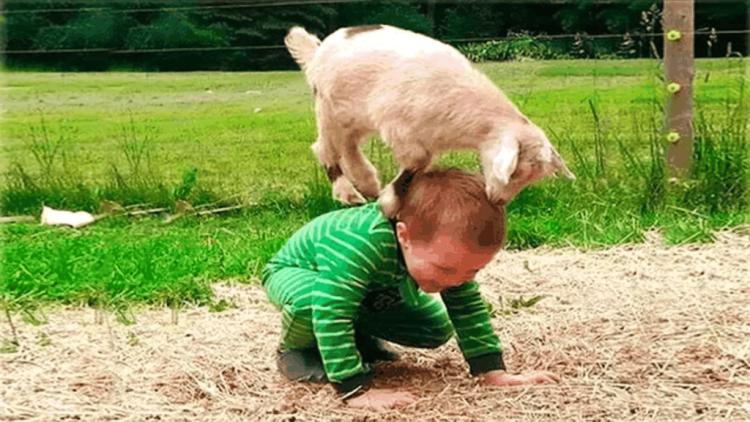 萌娃一不小心就被这些小动物欺负,搞笑的场面真是看一遍笑一遍