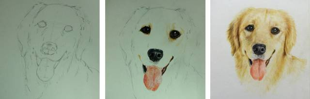 如何用彩铅画好动物? (十二天)