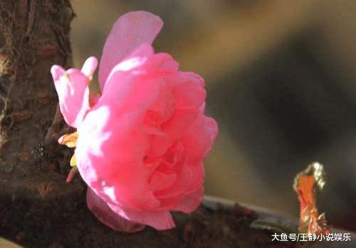 在四月好运不断、桃花都为你们盛开的三生肖(图2)