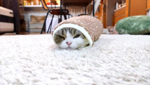 猫咪钻进小棉套中睡觉,刚要睡着,接着发生的一幕让猫咪好无奈