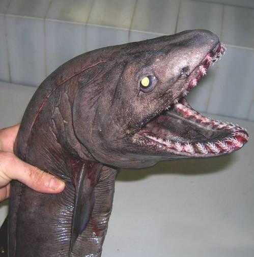 世界上七大最稀罕的动物, 有的你可能连它的名字都不认识!