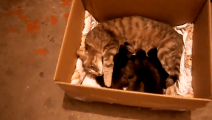 母猫和小猫被扫地出门,还在哺乳期呢