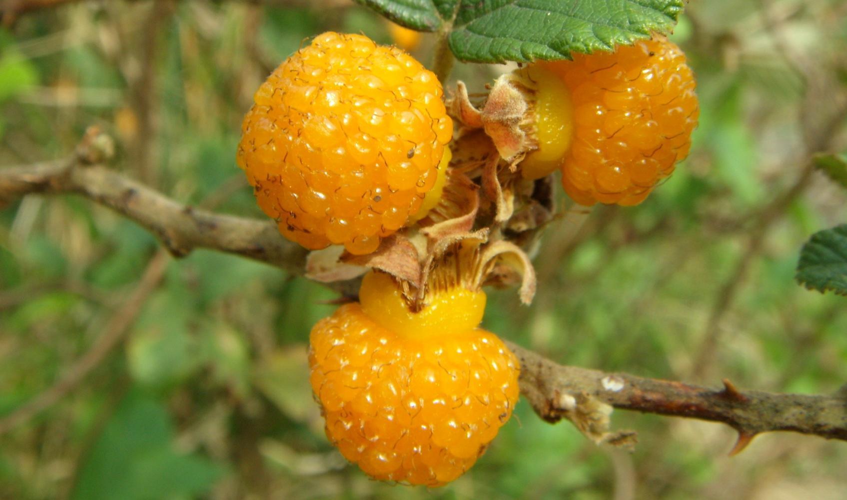 云南那些奇葩的水果, 个个都是美味