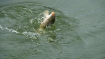 钓鱼-又一大师级人物诞生