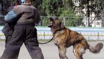 """为什么高加索犬是被称为""""最有可能战胜藏獒的狗"""",看看这世界最大狗的奔跑英姿"""