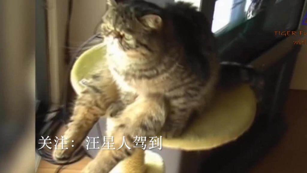 猫咪们,你的优雅高冷哪儿去了?都疯了!爆笑不止!