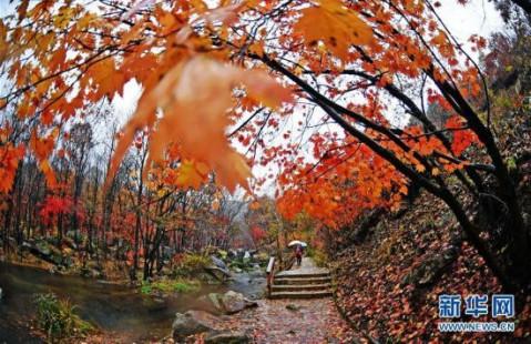 游客在辽宁本溪老边沟风景区观赏红叶(10月10日摄).