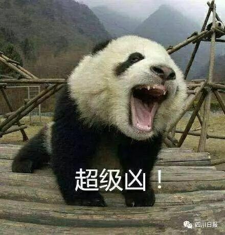 小熊猫看起来可爱,其实是比较凶猛的野生动物,为了人类自身的安全,也