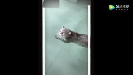 小猫咪居然还会游泳,第一次见到!