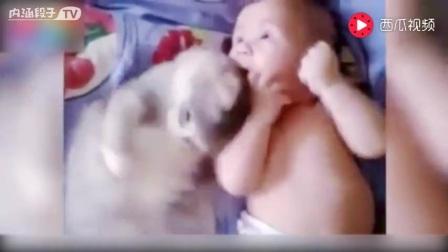 宝宝睡了狗狗的窝睡觉,汪星人的反应亮了!