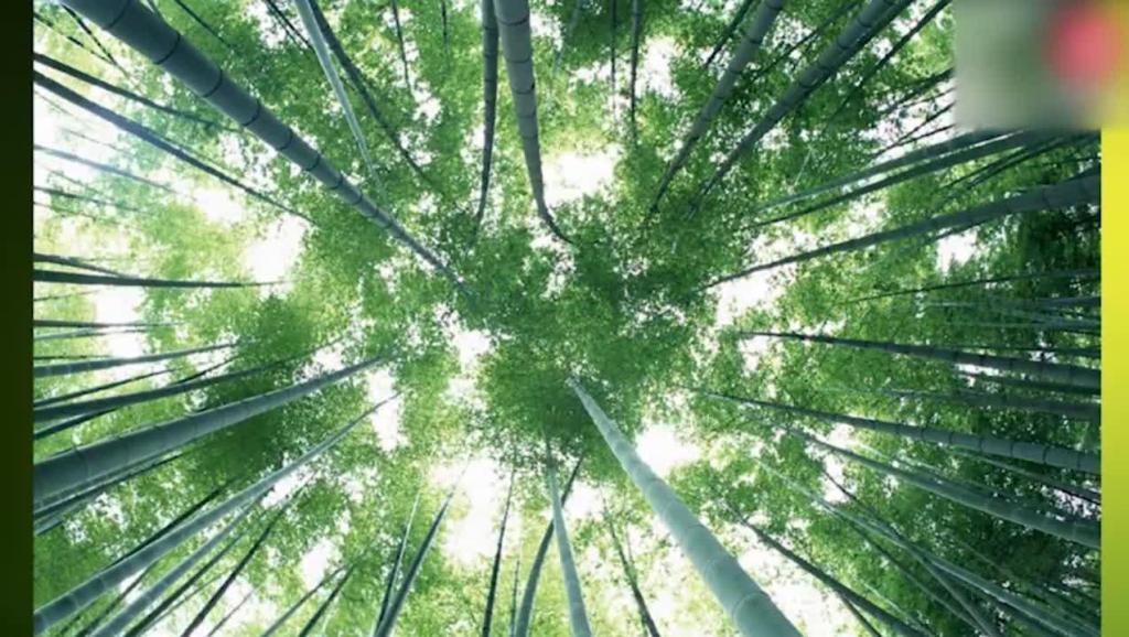葫芦丝月光下的凤尾竹教学视频葫芦丝零基础入门教程2