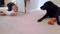当小宝宝第一次爬向大狗狗,最后的那一刻心整个融化了!