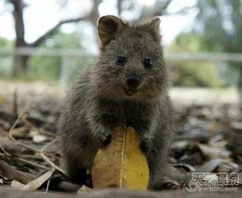 世界最稀有动物排行: 竟然还有它 - 微信奴
