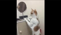 自恋的肥宅猫,每次照镜子都觉得自己超帅!