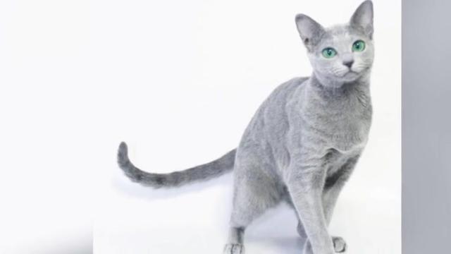 壁纸 动物 猫 猫咪 小猫 桌面 640_360