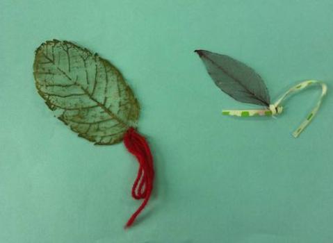 树叶标本动物蚂蚱
