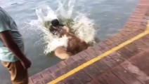 阿拉斯加放开我不要游泳 为了当网红狗狗已经受够了