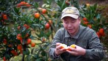 农村这种水果很特别,很多人第一次看见都不敢吃,你吃过吗?