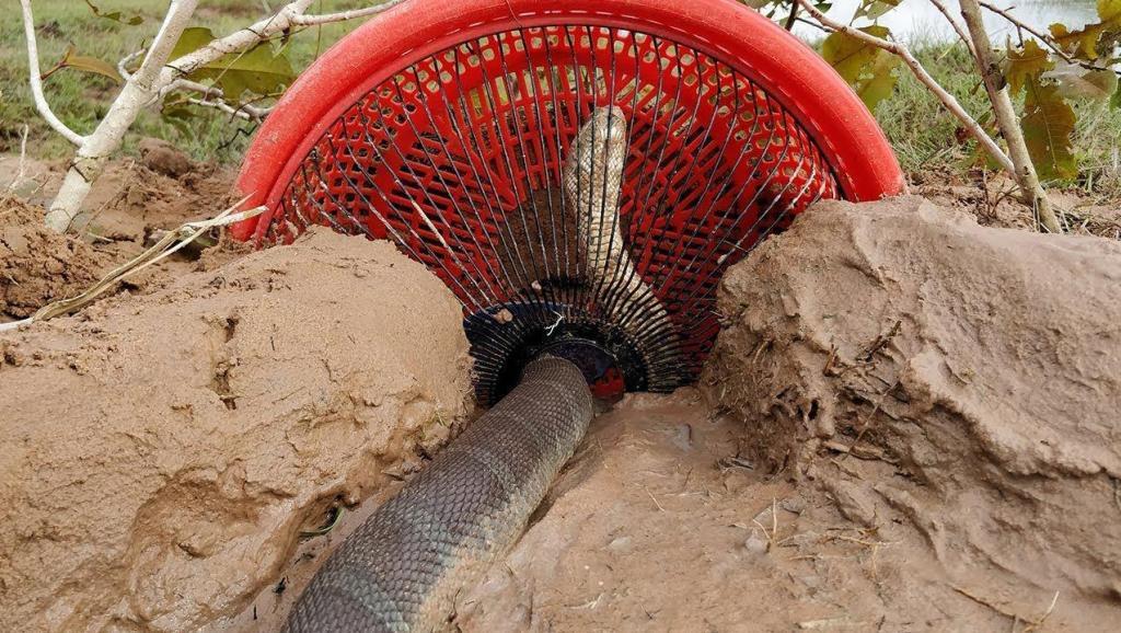 柬埔寨男孩河边发明神奇捕蛇神器,水蛇纷纷上钩,实在太有才了