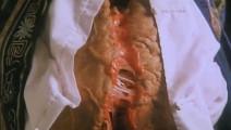 魔胎破肚而出,瞬间把小狗吃的只剩骨头