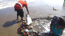 一个渔网打上来好多鱼,大鱼都不要