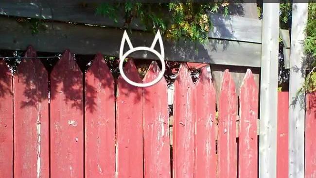 7s找猫猫挑战赛!看看你是铲屎官王者还是青铜!