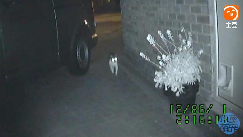 猫咪老是偷东西回家,被邻居发现家里东西,都是他的怎么办