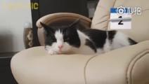 主人出差21天,回来后,猫咪的反应让人动容~#宠物卖萌中心