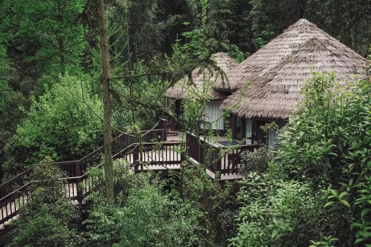都江堰·缇星谷森林树屋